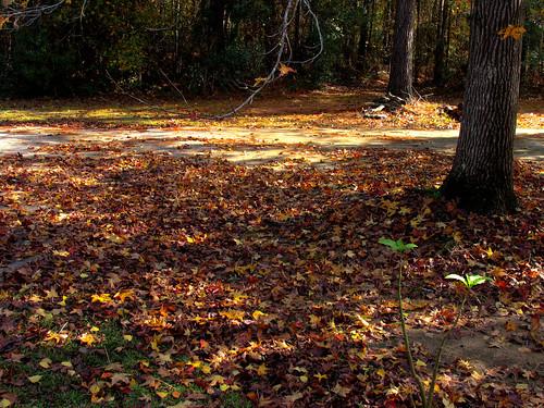 Got rake? - November 30, 2008