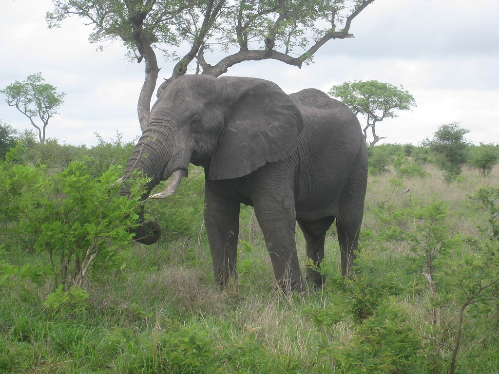 Elephants were often seen feeding, but not usually this close to the road
