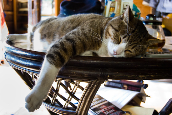 sleepy cat_1643