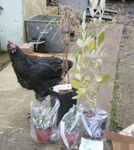 Hen Solo and new plants