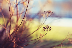 (Kjers..) Tags: blue brown green nature spring straw canonef50mmf18 explore frontpage canoneos450d