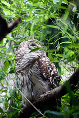 Bronx Zoo II (FreeVerse Photography) Tags: birds animals wildlife bears feathers tigers lions bronxzoo fowl eagles raptors owls ohmy wildanimals