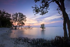 Dawn in the mini mangrove forest (ChR!s H@rR!0t) Tags: mygearandme mygearandmepremium mygearandmebronze