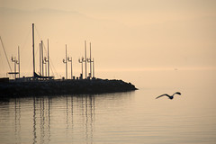 harbor in Evian-les-Bains 3 (olszuffka) Tags: france port evening harbor harbour evianlesbains