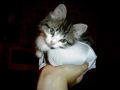 Tink! (Lauren Paulsen) Tags: baby cat furry kitty