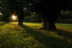 Shining Through. (darth_bayne) Tags: trees ireland light shadow summer greenleaves sun green grass leaves sunshine star golden evening bush shadows sigma wideangle kerry muckross summertime rays bushes shining clovers shiningthrough noe greengrass goldenlight sigma1020mm tyrosine 4trees anawesomeshot isawyoufirst excellentphotographerawards 6pointed ingledhillvision