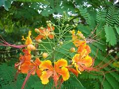 Rurrenabaque fleurs