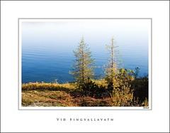 Thingvellir (Jokull) Tags: blue autumn trees red lake water yellow canon island photo iceland h2o photograph thingvellir þingvellir ísland tré 2007 icelandic vatn jökull jokull traveltoiceland pálljökull cometoiceland