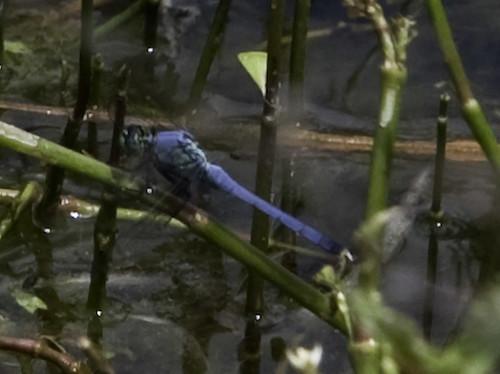 Reedy Pond 2-7