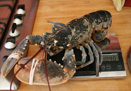 Lobster 18