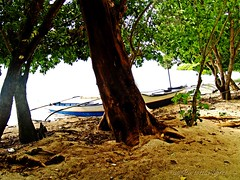 twin boats and a tree (Angkulet) Tags: travel beach boat philippines coron palawan calambuyanisland