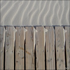 Holz und Sand und Wind / Wood and Sand and Wind (digitus_malus) Tags: wood beach strand sand holz surfaces rhizome oberflchen amrum 500x500 summum winner500