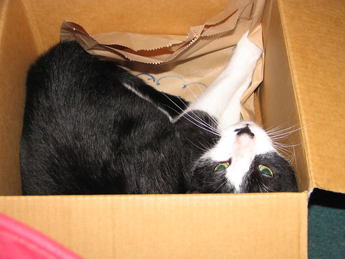 Jer in a Box