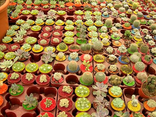 Proyect 365 / Day 22: Cactus land :-)