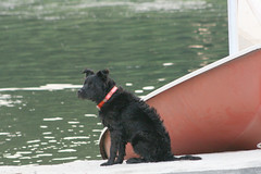 I am done (MNesterpics) Tags: dog water virginia boat va 2008 alexandriava bellhavenmarina