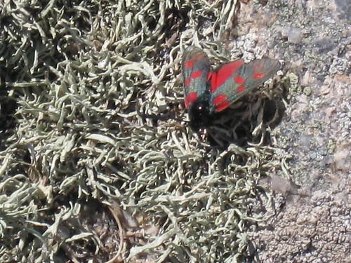 Strange Bug (23rd July)