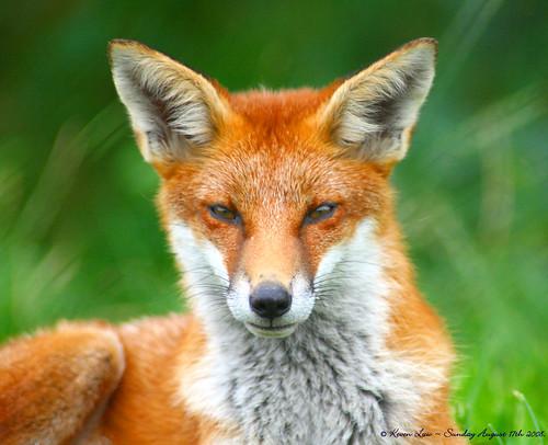 Looking Foxy....