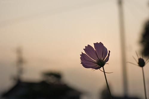 3390 : Nagano2008#5