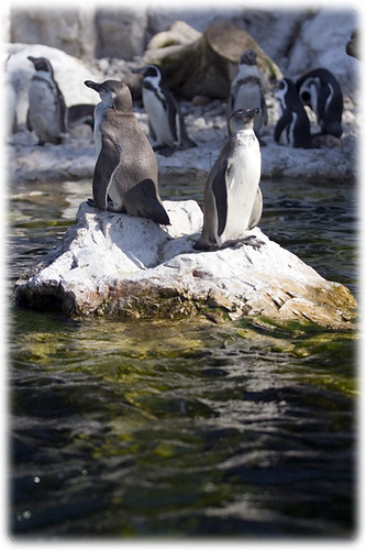 penguins on the island