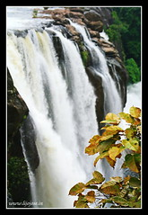 waterfalls and the leaves (L i j o J o s e) Tags: trip travel rain kerala explore mazha athirappilly puzha athirappillyhoe