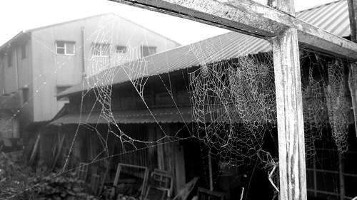 12.黑白的窗格與蜘蛛網