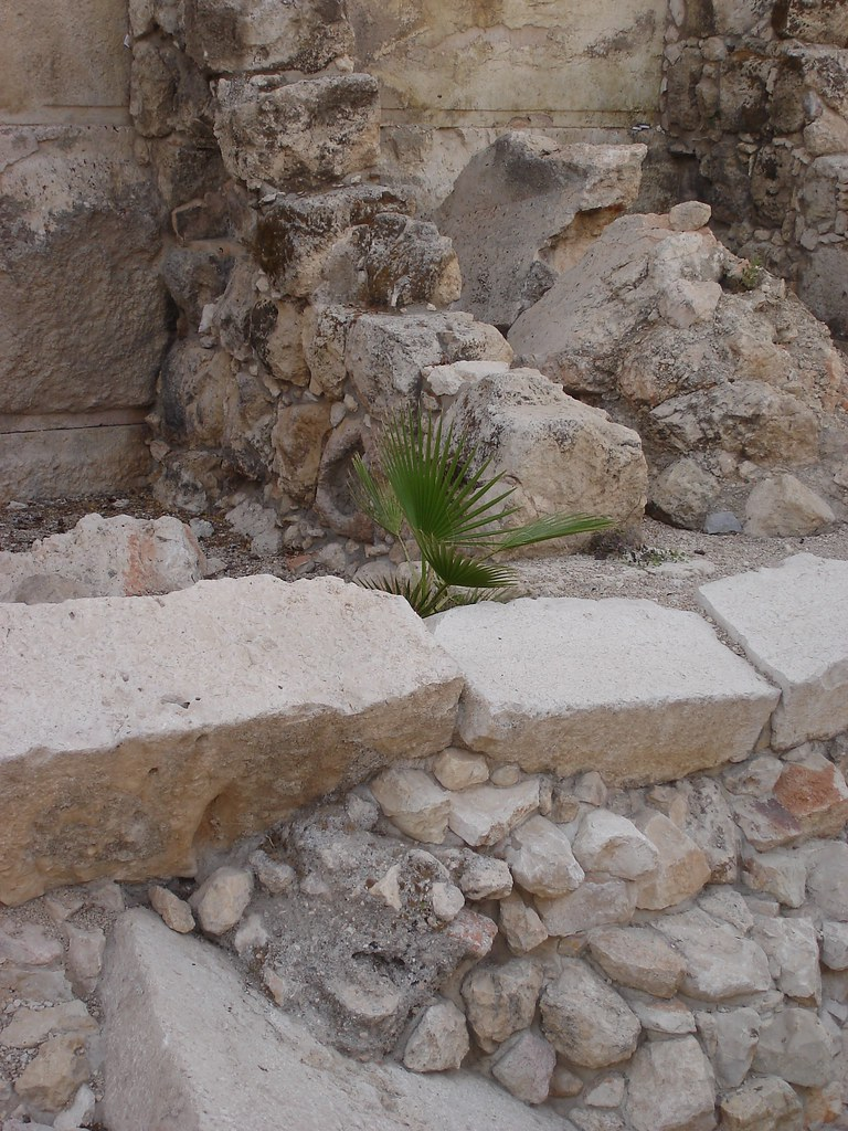 Life sprouts among the ruins