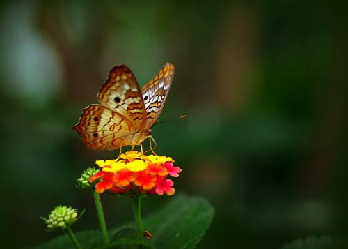30 Gorgeous Photos of Butterflies