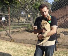 Holding a cub