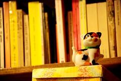 Gatito de juguete (victor mendivil) Tags: peru cat toy gato biblioteca nikkor libros juguete cruzadas d80 18135mmf3556g victormendivil