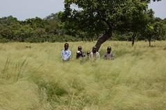 Kinder im hohen Gras