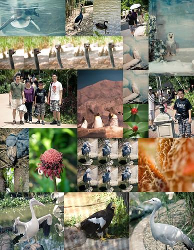 Singapore Bird Park Trip