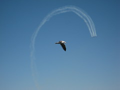 Blue Angels & Seagull IMG_1831 Photo