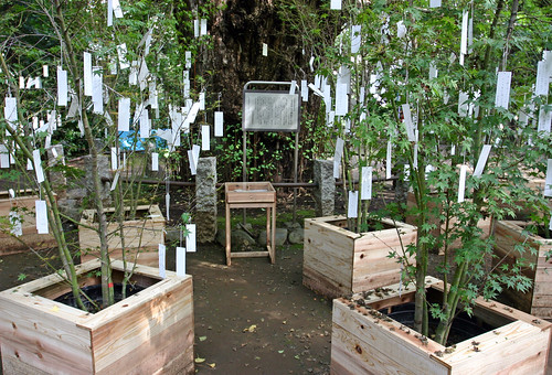 """Wish Tree for peace"" by Yoko Ono - 10"