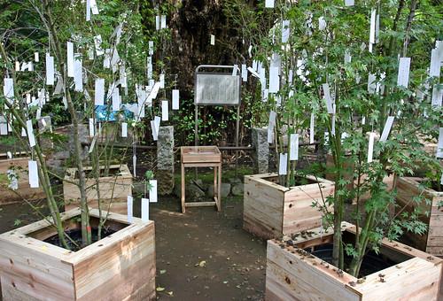 """Wish Tree for peace"" by Yoko Ono - 10"