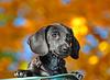 Walter the Trashcan Dog (Tom.Bricker) Tags: autumn walter fall leaves nikon florida bokeh disney disneyworld mickeymouse wdw waltdisneyworld themepark waltdisney orlandoflorida overtheexcellence wdwfigment tombricker walterthedog