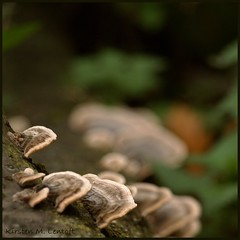 In the Corner of the Forest (Kirsten M Lentoft) Tags: nature forest denmark bokeh fungus dyrehaven anawesomeshot kirstenmlentoft