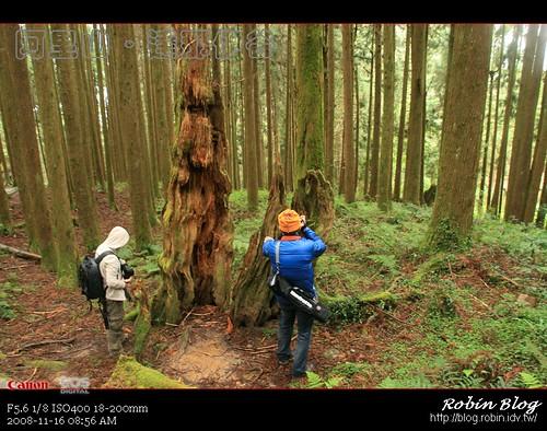 你拍攝的 20081116數位攝影_阿里山之旅154.jpg。