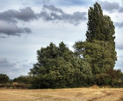 England: Bedfordshire Countryside. Harvest End (Tim Blessed) Tags: trees nature landscape countryside scenery harvest hay bales singlerawtonemapped