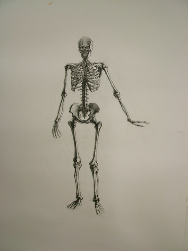 nou chee, skeleton, life drawing two, fall 2008