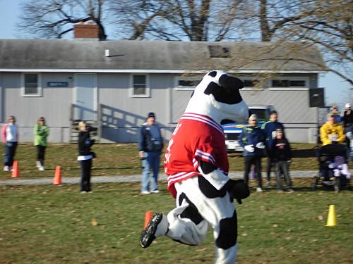 Turkey Chase Mascot Cow