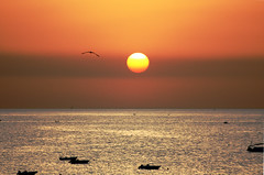 In volo (Luca Querzoli alias LQ Photo) Tags: sunset sea nature sunshine sunrise atardecer luca italia tramonto mare alba natura meridione abigfave bovalino querzoli lucaquerzoliphotographer fotografiedilucaquerzoli lulumiophotographer lqphoto lqfoto lqphotography lqfotografia fotolqlucaquerzoliphotography lqlucaquerzolifotografia