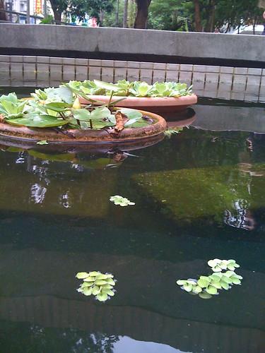 政大書城前的小水池