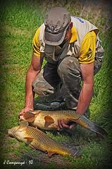 Pescador i carpes (Pep Companyó - Barraló) Tags: barcelona catalunya poisson pesca carpa carpe bages llobregat pêche josep carpio cyprinus esportiva companyo companyó barralo concadelllobregat