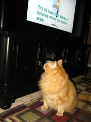 Jasper checking out the new TV unit, and the Wii Fit