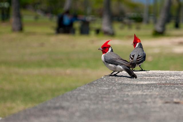Aloha birds