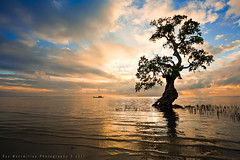 Mystic Tree... (Rex Maximilian) Tags: ocean sea tree clouds sunrise boat fishermen philippines mangrove shore lowtide siquijor enriquevillanueva visayanislands