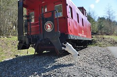 Jasper checks out the caboose