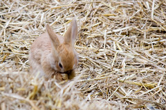 Please lemme have a carrot, please? (ksvrbrg) Tags: rabbit bunny konijn