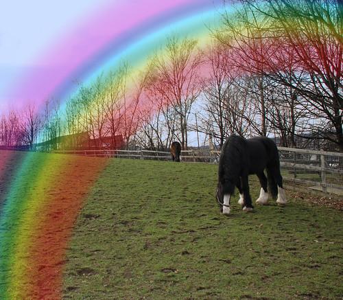 HeeleyCityFarm2 145 rainbow