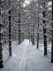 Kolapore Ski Trail Through the Pines